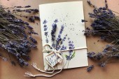 Lavender Stories